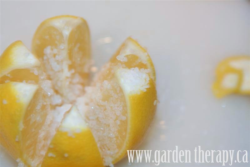fill lemons with kosher salt - how to make preserved lemons