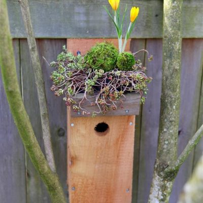 Green Roof Birdhouse Tutorial