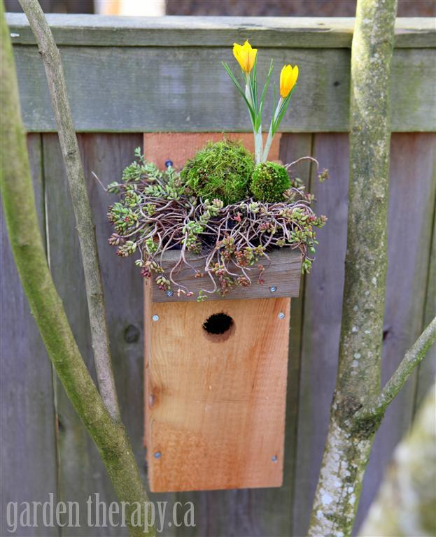 Green Roof Birdhouse DIY With Crocus Moss And Sedum Medium
