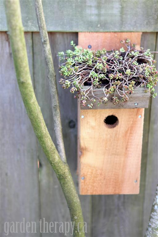 Green Roof Birdhouse DIY and lots of other ways to organically control pests in your garden
