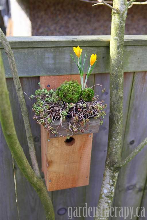Green Roof Birdhouse Tutorial Garden Therapy