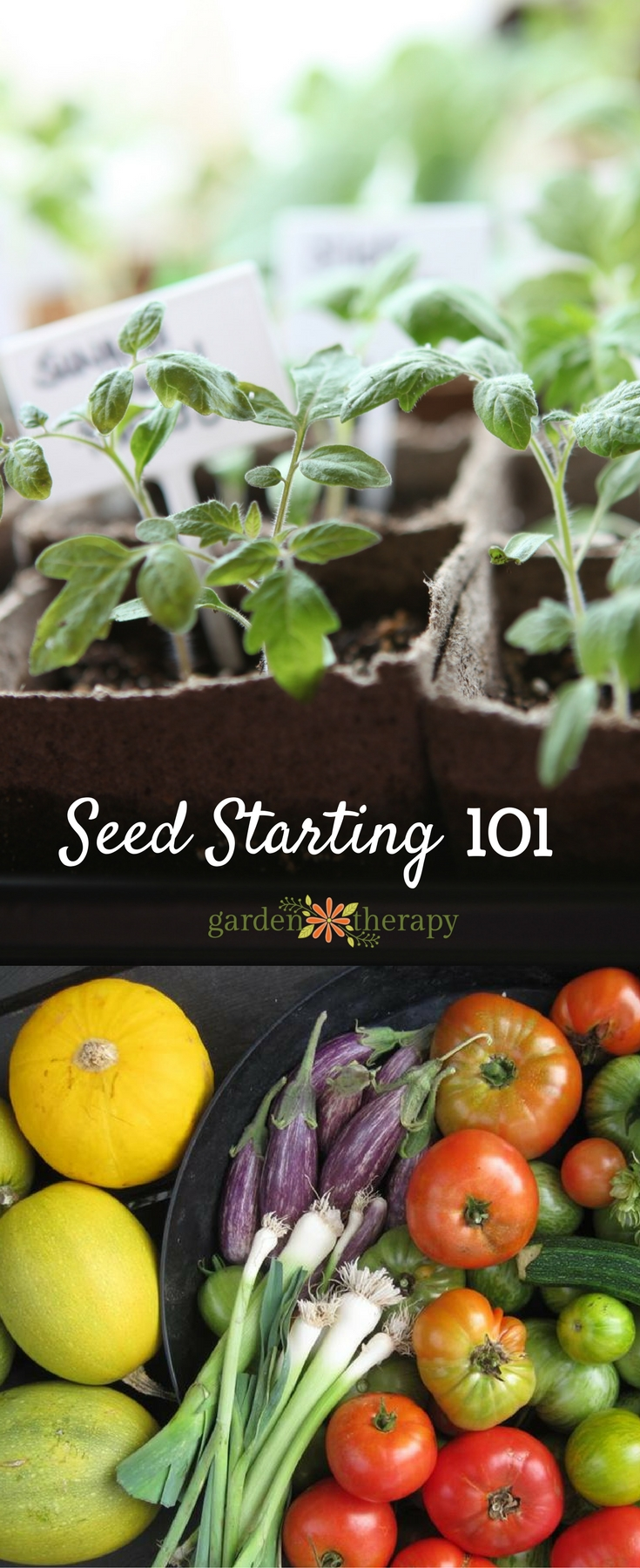 Seed starting 101 the basics for home seed starting