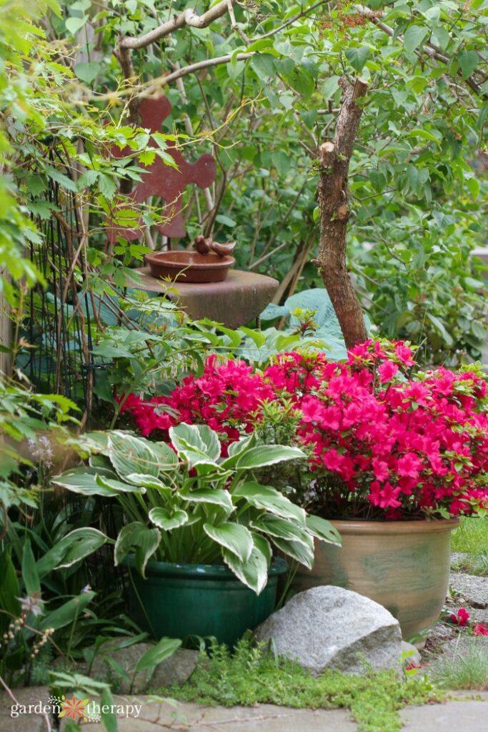 Shade Container Garden