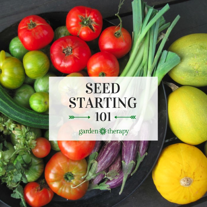 This is the perfect guide for beginners! Start seeds successfully and grow your own organic garden