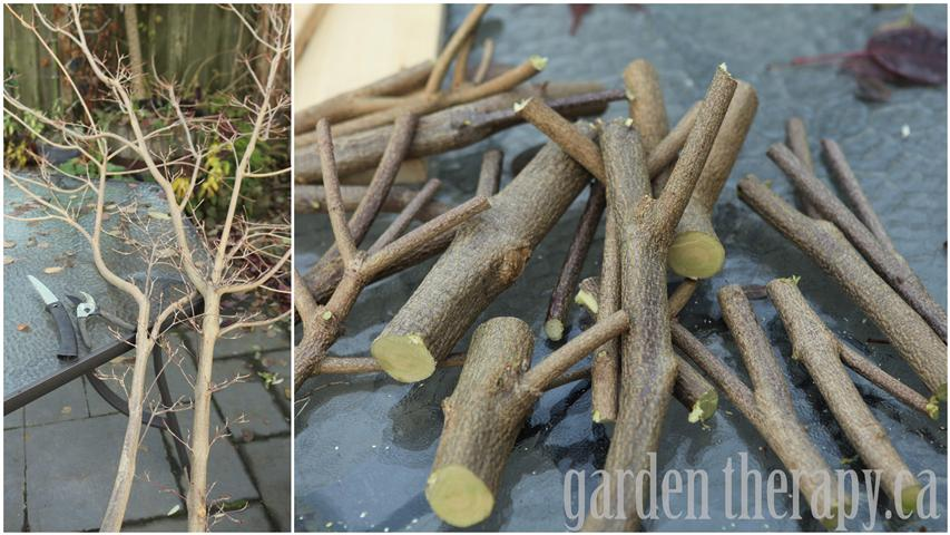 fallen branches for a DIY home decor project