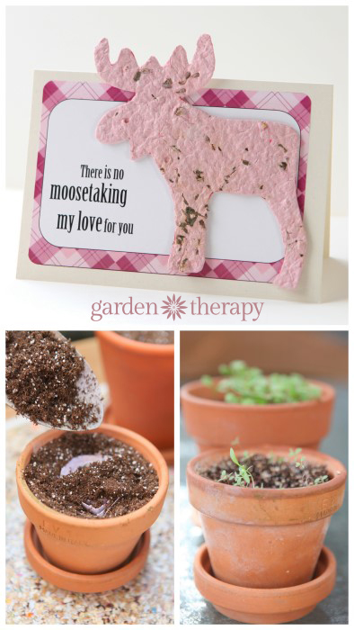 Valentine's Day Cards you can plant and grow!