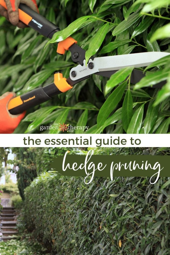 Your Guide to Pruning Hedges