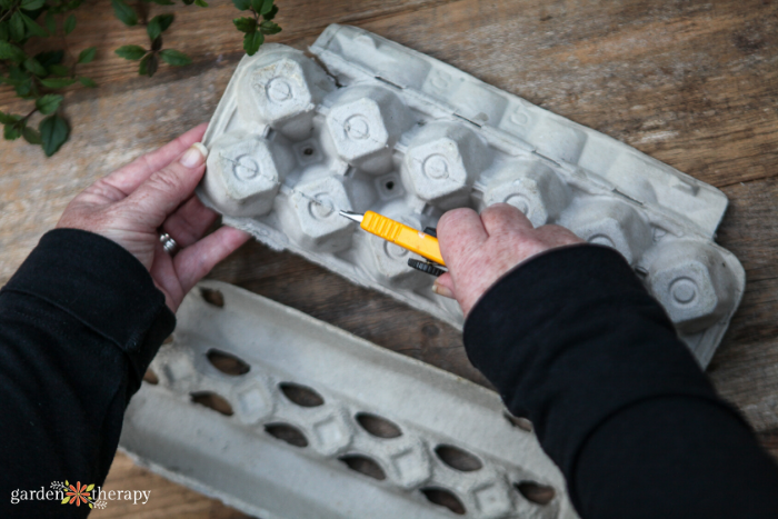 woman preparing an egg carton for seed starting