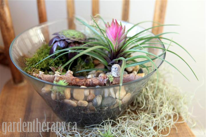How to make a salad bowl terrarium