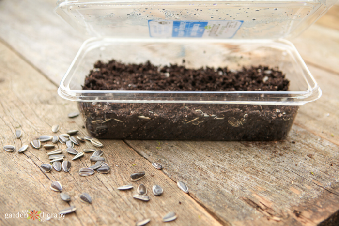 plastic salad green container converted into a diy greenhouse for seed starting