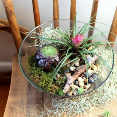 Salad Bowl Terrarium Project