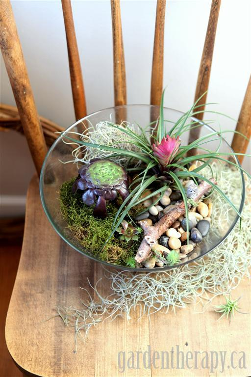 Making a terrarium from a salad bowl