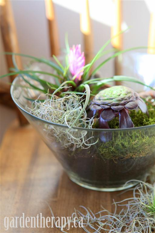 Salad bowl terrarium project.