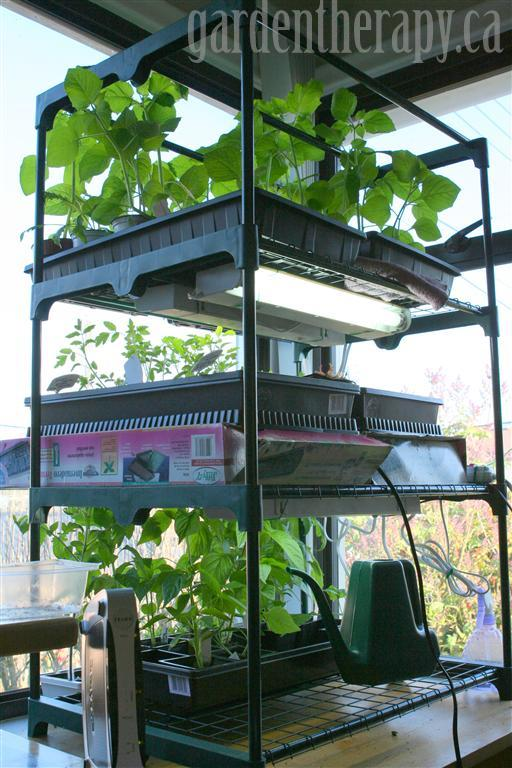 grow light shelving for seed starting indoors garden therapy. Black Bedroom Furniture Sets. Home Design Ideas
