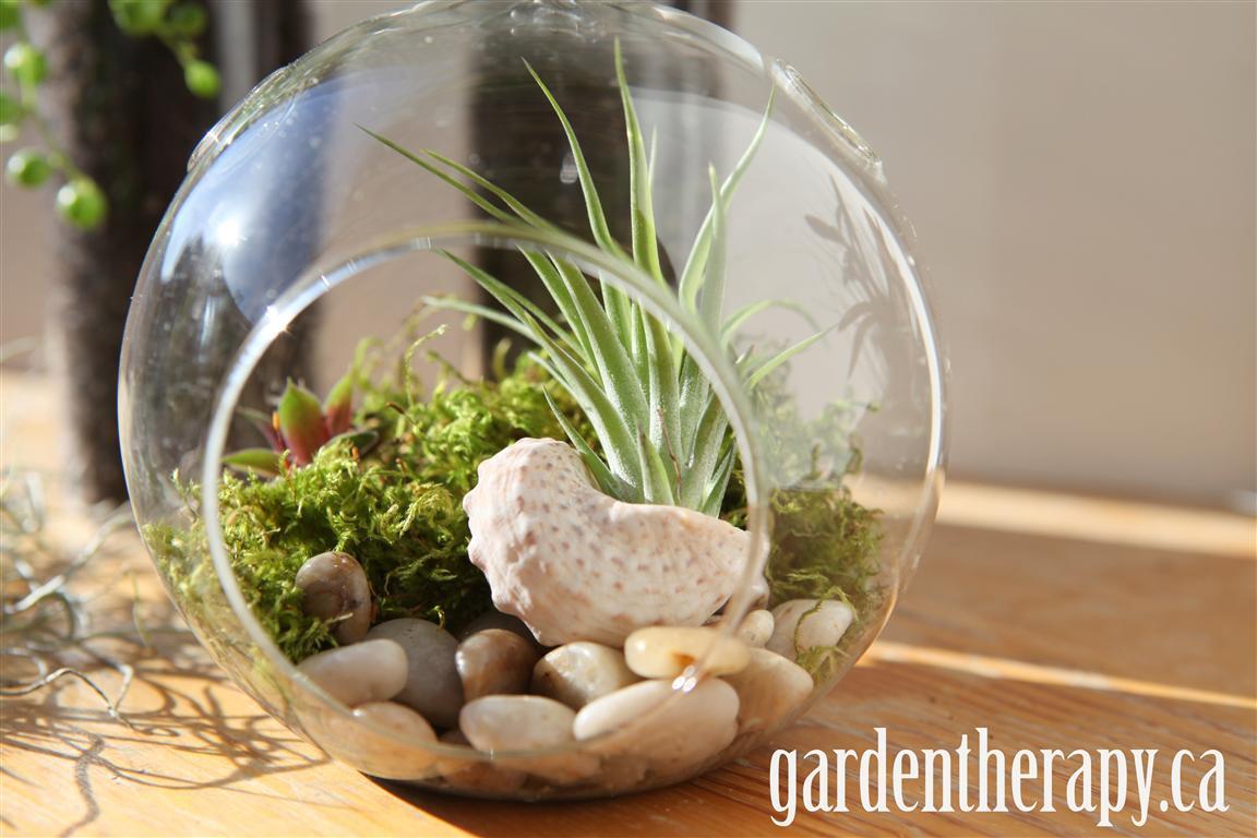 hanging globe terrarium