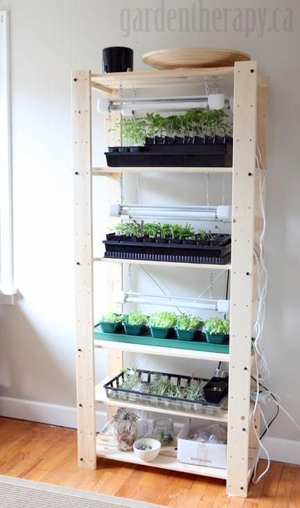 seed shelf grow lights