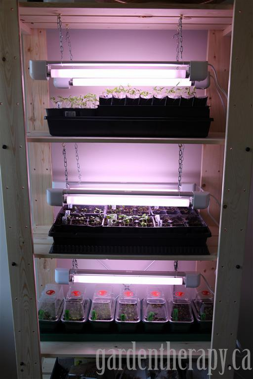 Grow Light Shelving For Seed Starting Indoors Garden Therapy