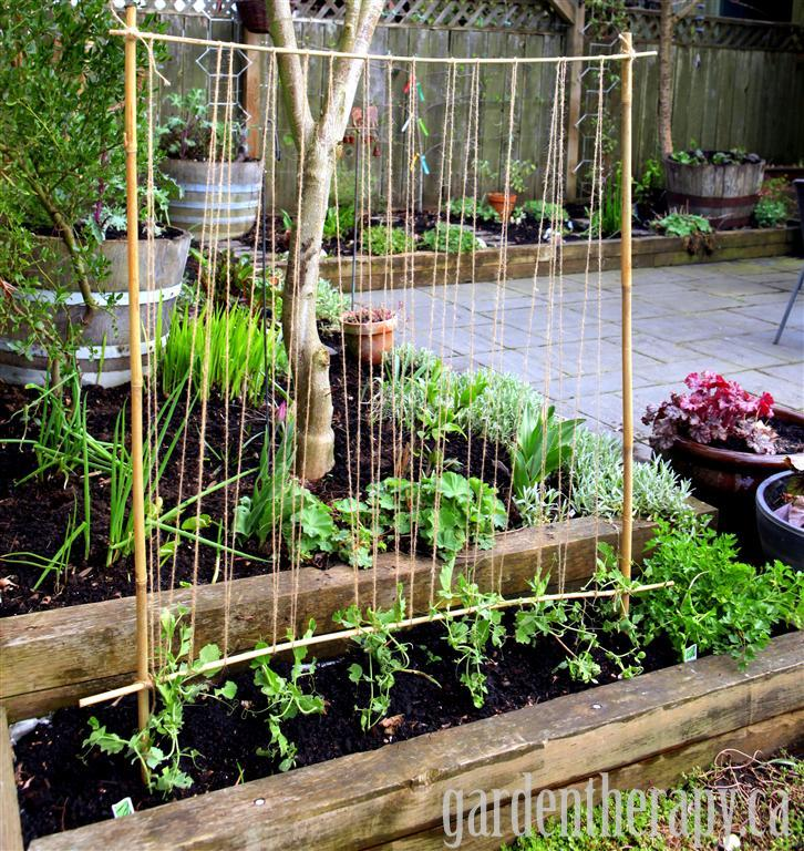 Sweet Pea Trellis Ideas Part - 23: Garden Therapy