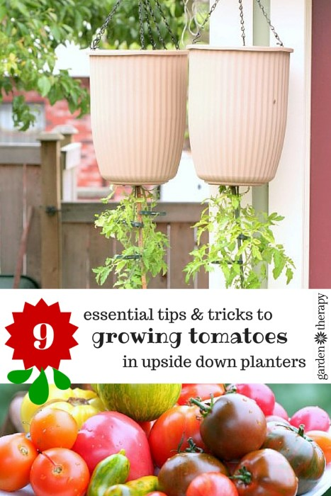 How To Grow Tomatoes In Upside Down Planters And Actually Get Lots Of Fruit