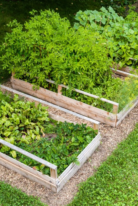 How to turn lawn into raised garden beds
