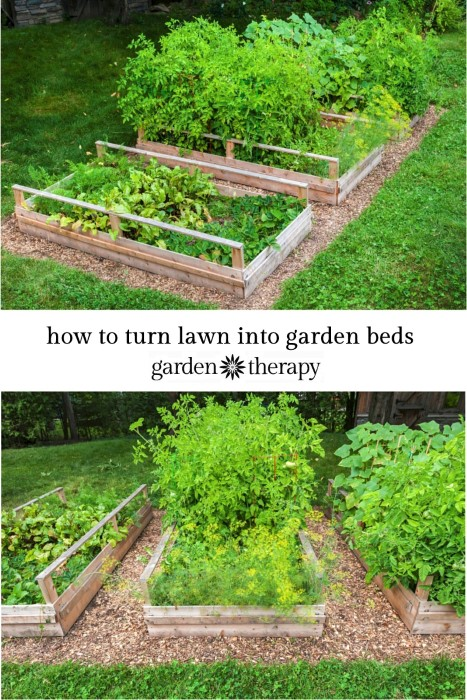 Note to self - turn lawn into food producing garden beds!