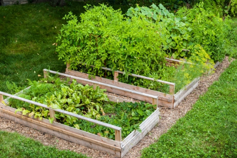 Raised Garden Beds from lawn
