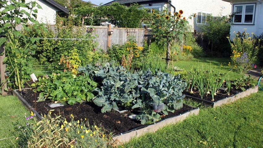 vegetable gardens need lots of water in the summer, so build your raised bed near a water source.