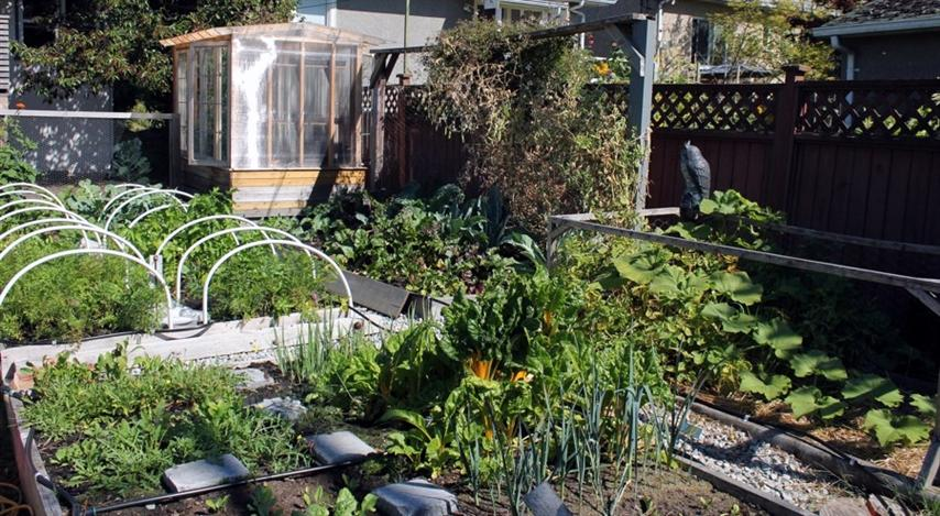 Victory Gardens Vancouver Raised Vegetable Garden Beds with poly tunnels, arbor, and shed