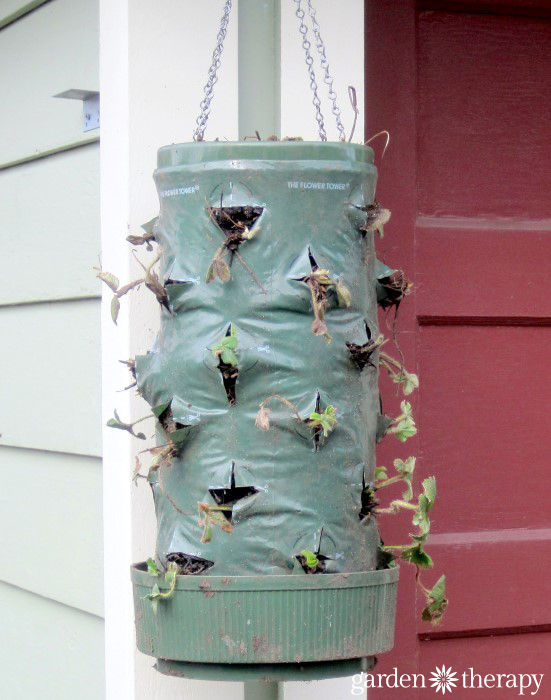 You won't believe how this hanging strawberry planter turned out