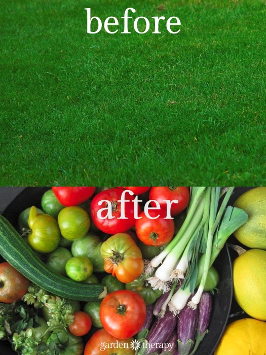 how to turn lawn into a vegetable garden!