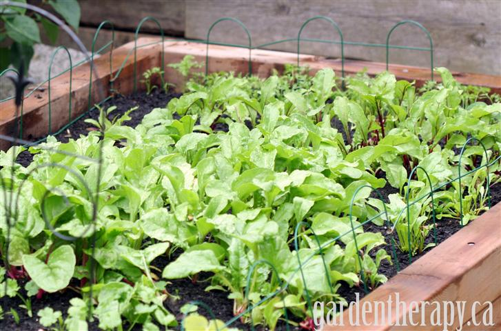 Building a rasied vegetable garden bed