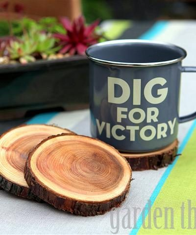 Natural Branch Coasters