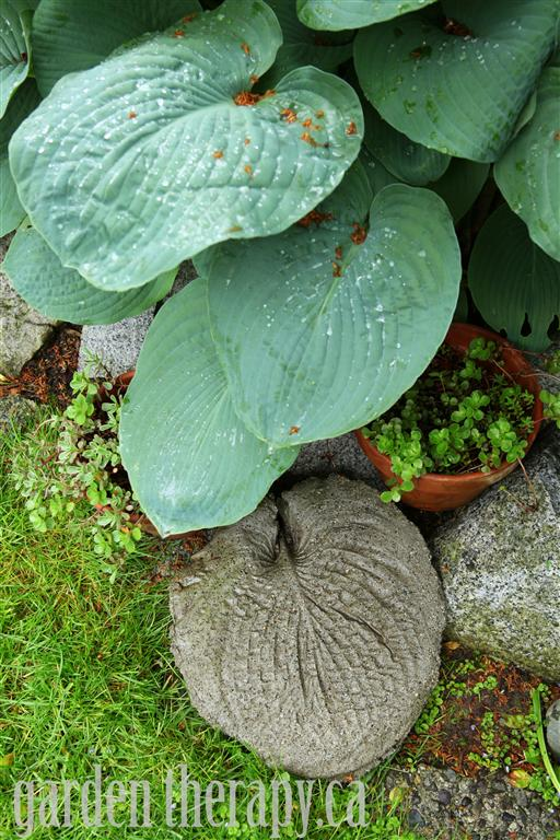 Garden Stepping Stones Molded from Hosta Leaf