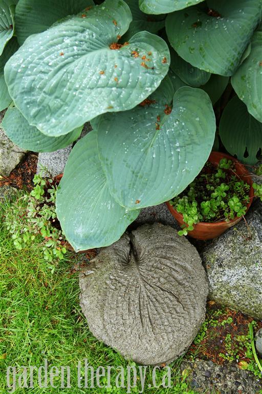 Garden Stepping Stones Molded from Hosta Leaf