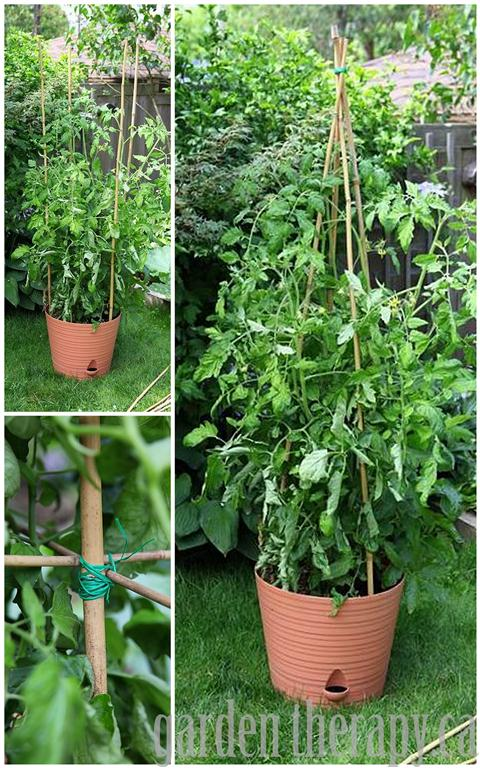 DIY Bamboo Tomato Cage