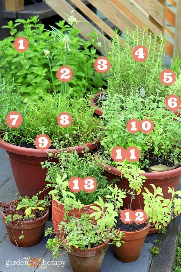 perennial herb garden map