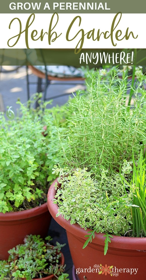 Lovely Grow A Perennial Herb Garden In Any Space