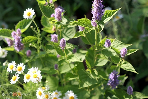 flowering herbs for small spaces