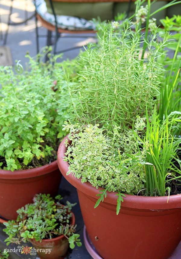 Grow Your Own Perennial Herb Container Garden