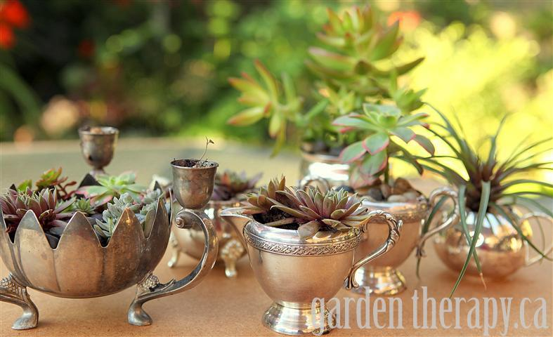Succulents in Vintage Silver