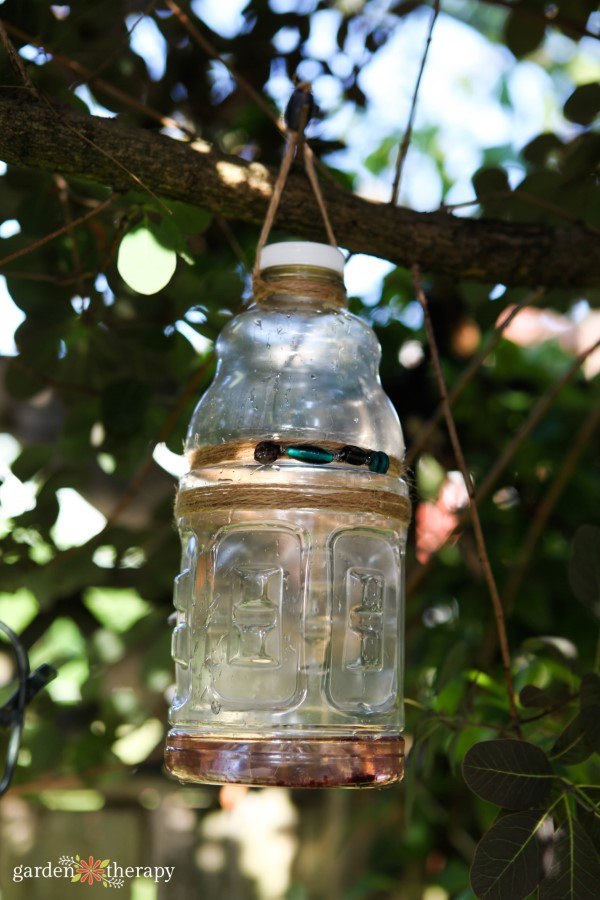homemade wasp trap made with a recycled bottle