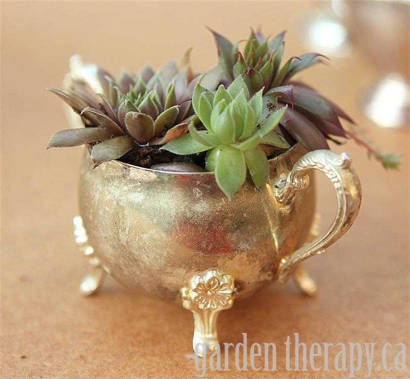 Hens and Chicks in Vintage Silver Dinnerware