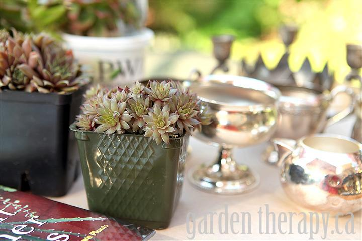 Planting Succulents in Vintage Silver
