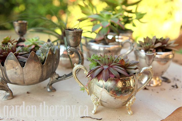 Potting up Succulents in Vintage Silver