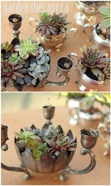 Succulent combination of plants in Silver Planters