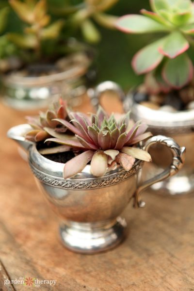 vintage silver creamer being used as a planter