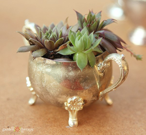 succulents planted in vintage sugar bowl