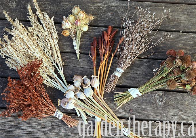 Dried Flower Stems and Seed Pods