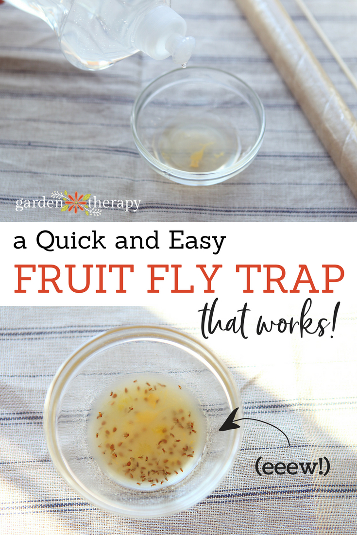 a quick and easy fruit fly trap that works
