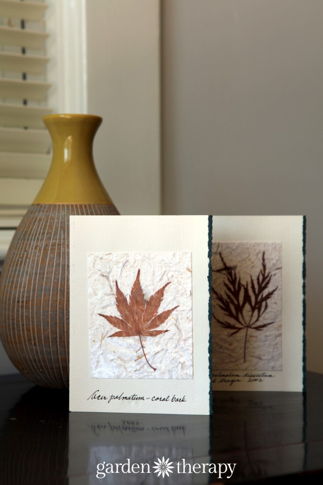 pressed leaf cards - how to press leaves and lots of ideas to use them